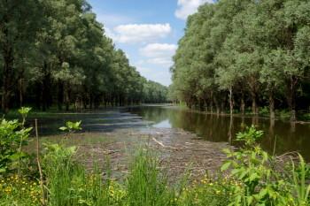 Bajai látnivalók - Gemenci erdő