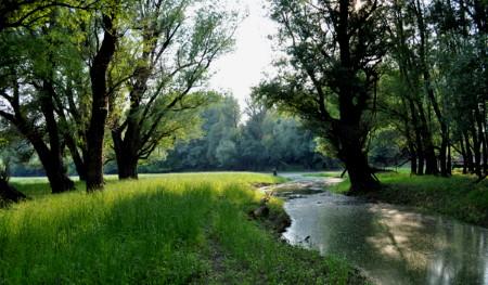 Gemenci erdő túra
